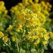 春を呼ぶ!早春の黄色い花々