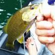今回はボートで釣り!野尻湖