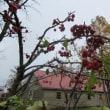 君愛しきと   月に寄せ    横顔想う    秋の桜よ