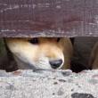 仔犬の顔つき