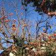 今年の秋♪