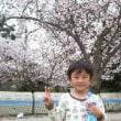 大阪の桜 第1弾