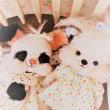 桜ミルクティぷく☆パンダウサギぷく☆ワンぷくちゃん…ママボシュウ♪