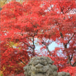 鹿沼のパワースポット・古峯神社 ~紅葉の頃