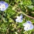 春になり、雑草も次々に花が咲く