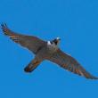 野鳥撮影(D500の設定)
