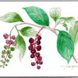 植物の 実が 秋いろに 染まり始める、、、