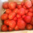 小西農園さんのトマトが始まりましたよ!