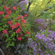 日曜の午後は花撮り山散歩