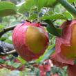 奈良ものろーぐ(19)奥徳平/大阿太高原(大淀町)に梨を植えた先覚者