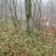 3月8日   残雪の森