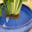 生け花教室(ニューサイランとバラの洋風花材の根締めいけ)