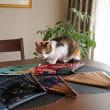 猫ちゃんの扇子さばき