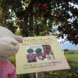 弘前りんご公園(2017) 収穫体験
