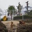 焼肉ランチのあとは、天王寺公園「 てんしば 」を楽しみます ~ どうぶつえんも ♪ ~