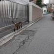 盛岡駅からWalker(猫編)