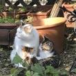 ネネちゃんと 3匹の仔猫。