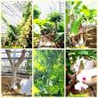さいたま市見沼散策 ~浦和くらしの博物館民家園・大崎園芸植物園~