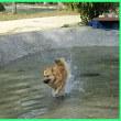 暑いから じゃぶじゃぶ楽し 水遊び