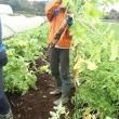 農業実践教室第23期:9回目~雨予報でしたが教室開催!濃い一日となりました