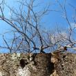 クルミの木★冬姿