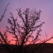 Pink Sky (11-30-17)