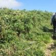 6 津黒山(1118m:岡山県真庭市)登山(続き)  山頂に到着