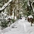 2018年1月27日 白山比咩神社 表参道
