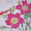 iPadでバラの花を