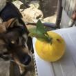 ゴンちゃんの外犬生活