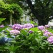 紫陽花や小雨にうっとり昼寝かな