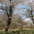 ブルーの瞑想会・桜吹雪の祝福へと開く♪