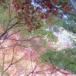 20171119 神代植物公園・植物多様性センター