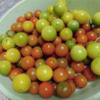 ミニトマトの収穫・・・いわき