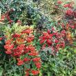 秋の赤と緋