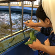 秋のバス遠足 越前松島水族館