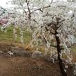 甲府盆地と桃の花