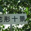 「世界の椿館・碁石」の椿・玉之浦(たまのうら) 2017年11月15日(水)