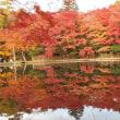 早朝ランで紅葉の雲場池へ・・