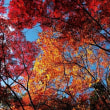 子供が良く使う手・・甲山森林公園の紅葉
