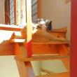 猫の日向ぼっこ!