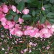 薔薇公園にて