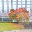 東京ツアー⑥隅田川クルーズ