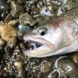 秋の渓流4 -尺岩魚-