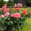 旧古河庭園のバラ・・4