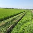 灼熱第3ラウンド・田んぼ草刈り 命を守りながら行けるところまで行ってみよう。
