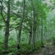 朝日が出なくとも贅沢なブナの森