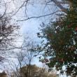 春の森を歩く [友愛の森/里山再生プロジェクト<30>]