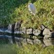 小石川後楽園の鳥たち