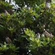 鴨川で見かけた花  野鳥